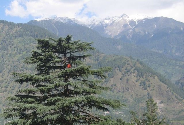Image of Tree t011