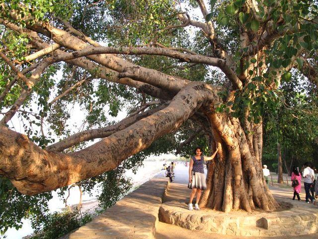 Image of Tree t013