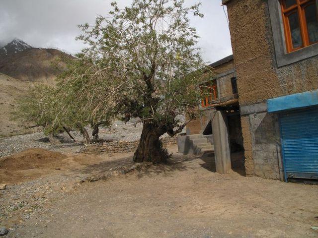 Image of Tree t019