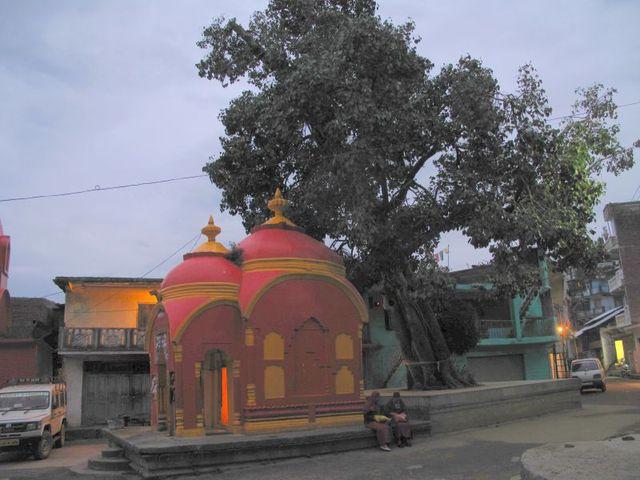 Image of Tree t021