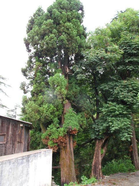 Image of Tree t025